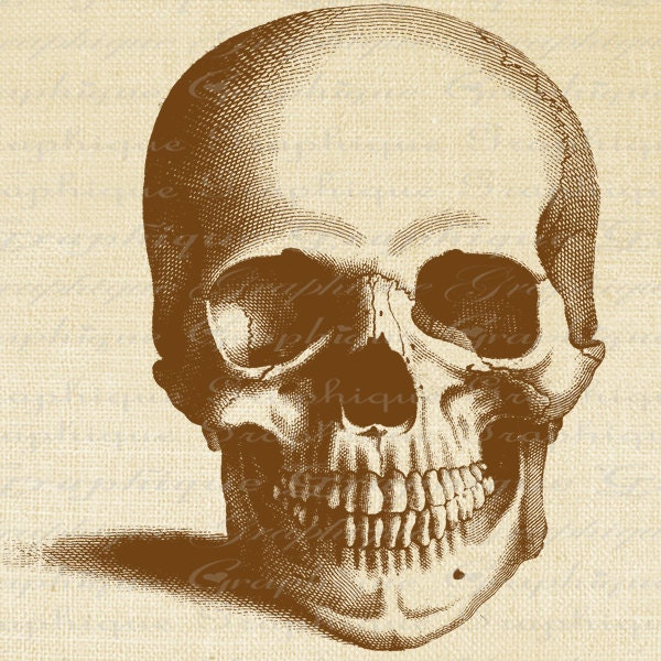 Frontal View of Skull Skull Front View Anatomy