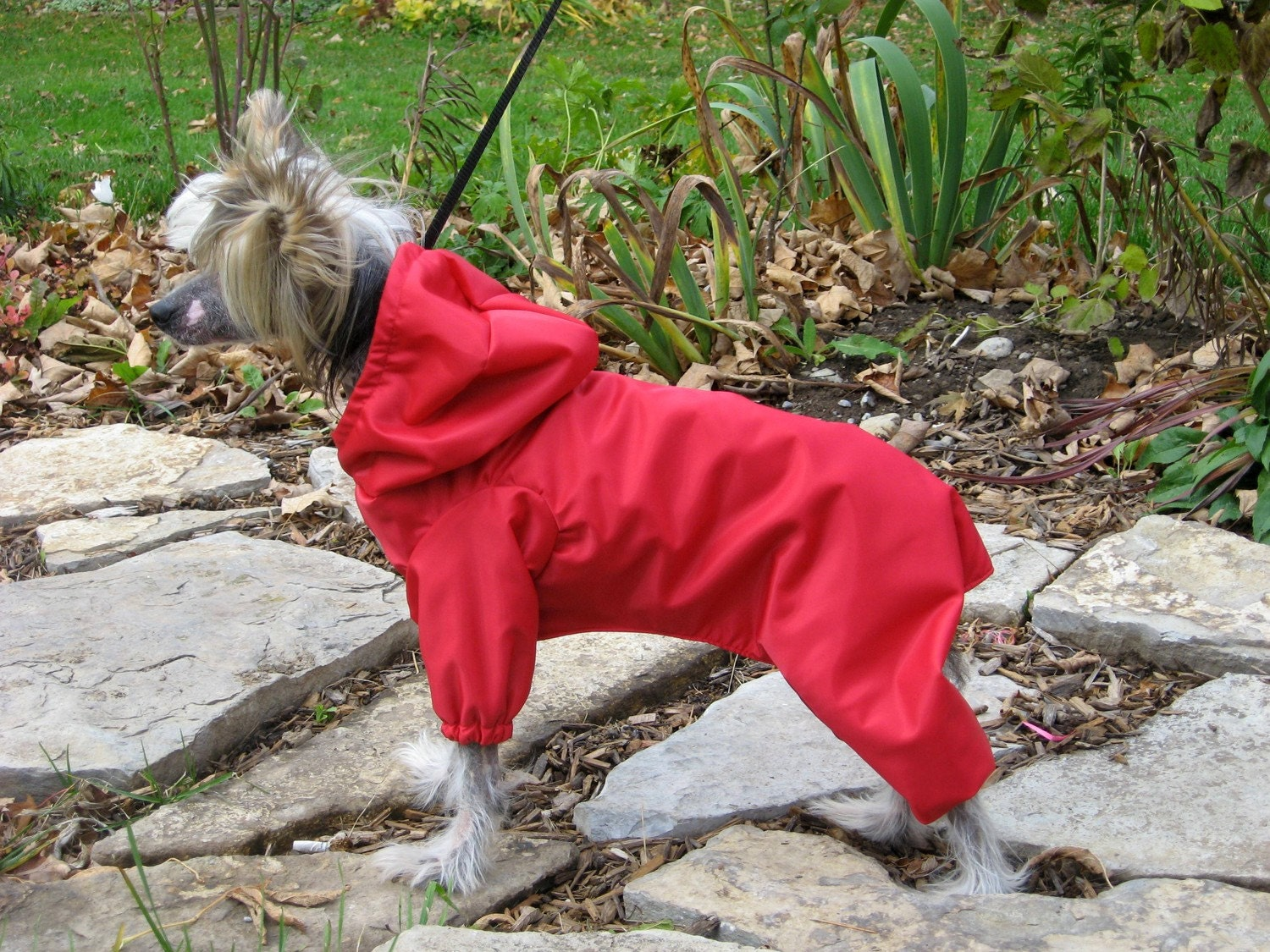 Snowsuits for dogs with feet dog breeds picture
