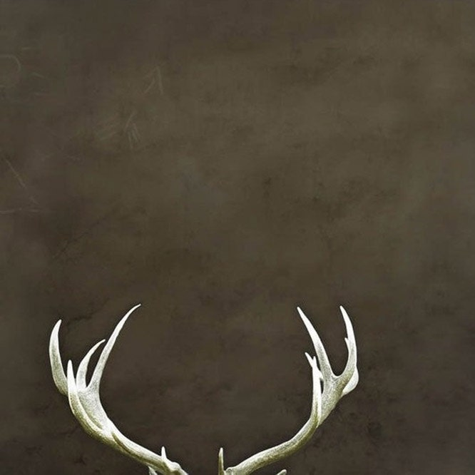 BOGO SALE, Deer Antler print, modern Fall home decor, for men and dudes, minimalist man cave wall art, quirky, outdoor, 5x5 print - Raceytay