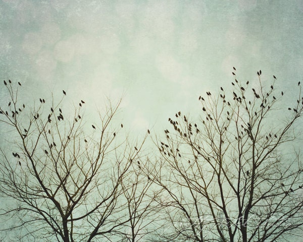 Fine Art Photograph, Bare Winter Trees, Perched Birds, Silhouette, Teal, Blue Hues, Nature Art, Woodland, Flying, Bird Lover, 5x7 Print - PrettyPetalStudio