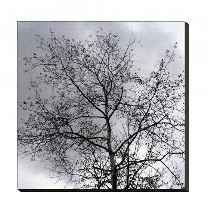 Stormy Skies, Late Autumn Tree Silhouette, 24 x 24 Museum Gallery Wrap Canvas Print, The Maine View