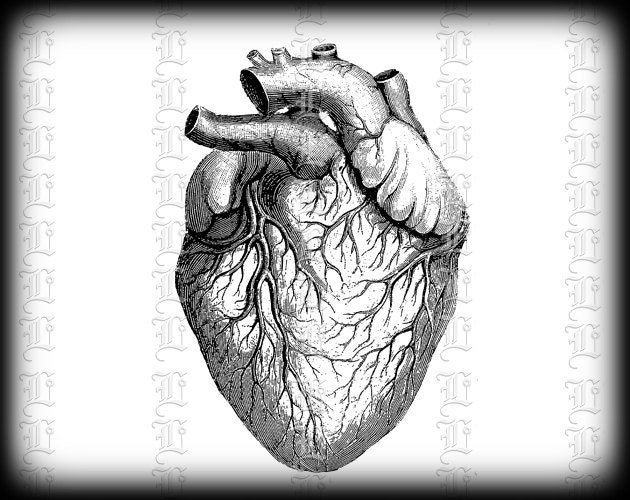 Human heart anatomy vintage - photo#20