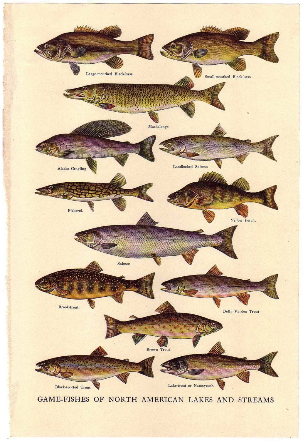 1927 vintage fish encyclopedia illustration by sushipotvintage for Illinois game and fish