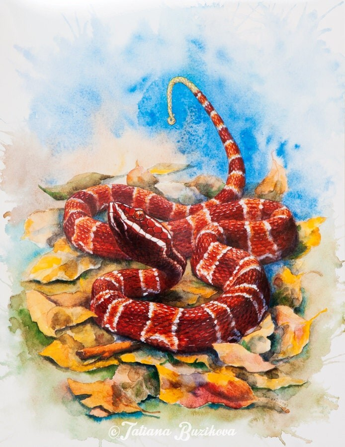 Print Snake from original watercolour painting, Agkistrodon Bilineatus 39x30,5cm - LinkedArts