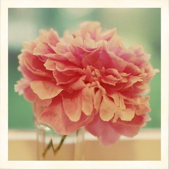 Сорбет 8x8 цветов фотографии - фотографии природы жимолость розовый