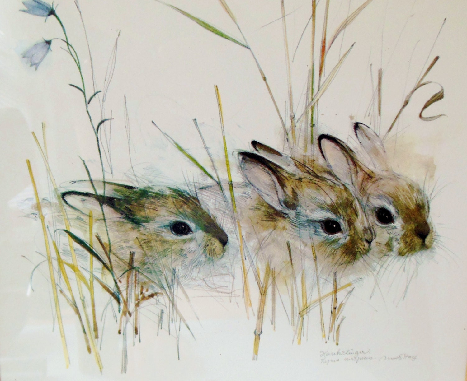 Rabbit Watercolor, Harekelinger, Danish Artist - FreewheelFinds