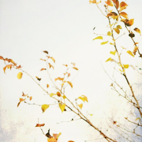 Nature photography - Autumn Decor yellow leaves tree branch photograph pale subtle minimal neutral soft white golden gold yellow decor sunny - LupenGrainne