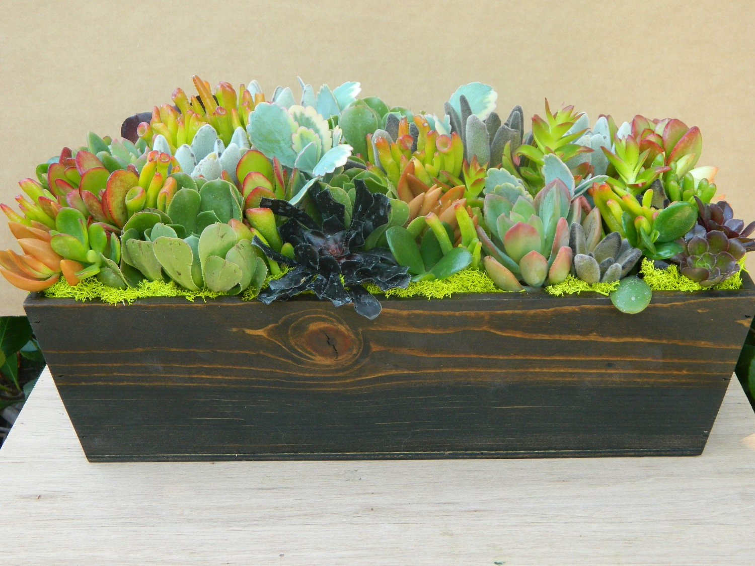 Succulent Centerpiece Fall By Tobieanne