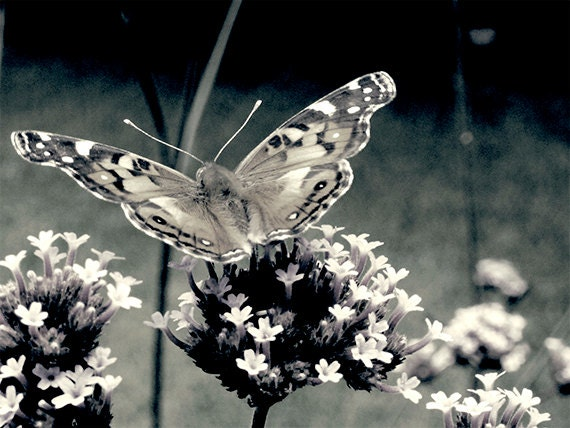 Butterfly Black and White Photography Art Print - MarshaHolmes