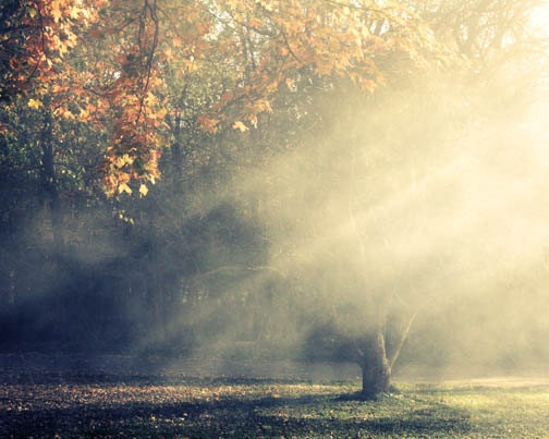 Autumn Landscape Photograph - sun rays golden trees heavenly smokey foggy ethereal dreamy 8x10 - FirstLightPhoto