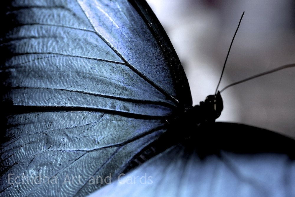 Abstract Photography, Butterfly Print for Living Room Decor, Blue Wing - EchidnaArtandCards