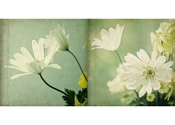 Wall Decor White Flowers : White flower wall decor two anemone photographs by judystalus