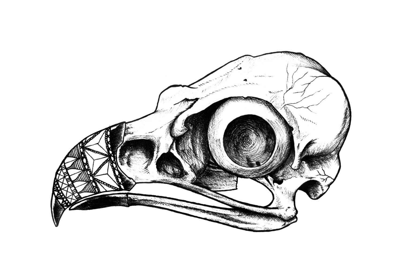 Bird Skull Drawing Drawings Sketch Coloring Page