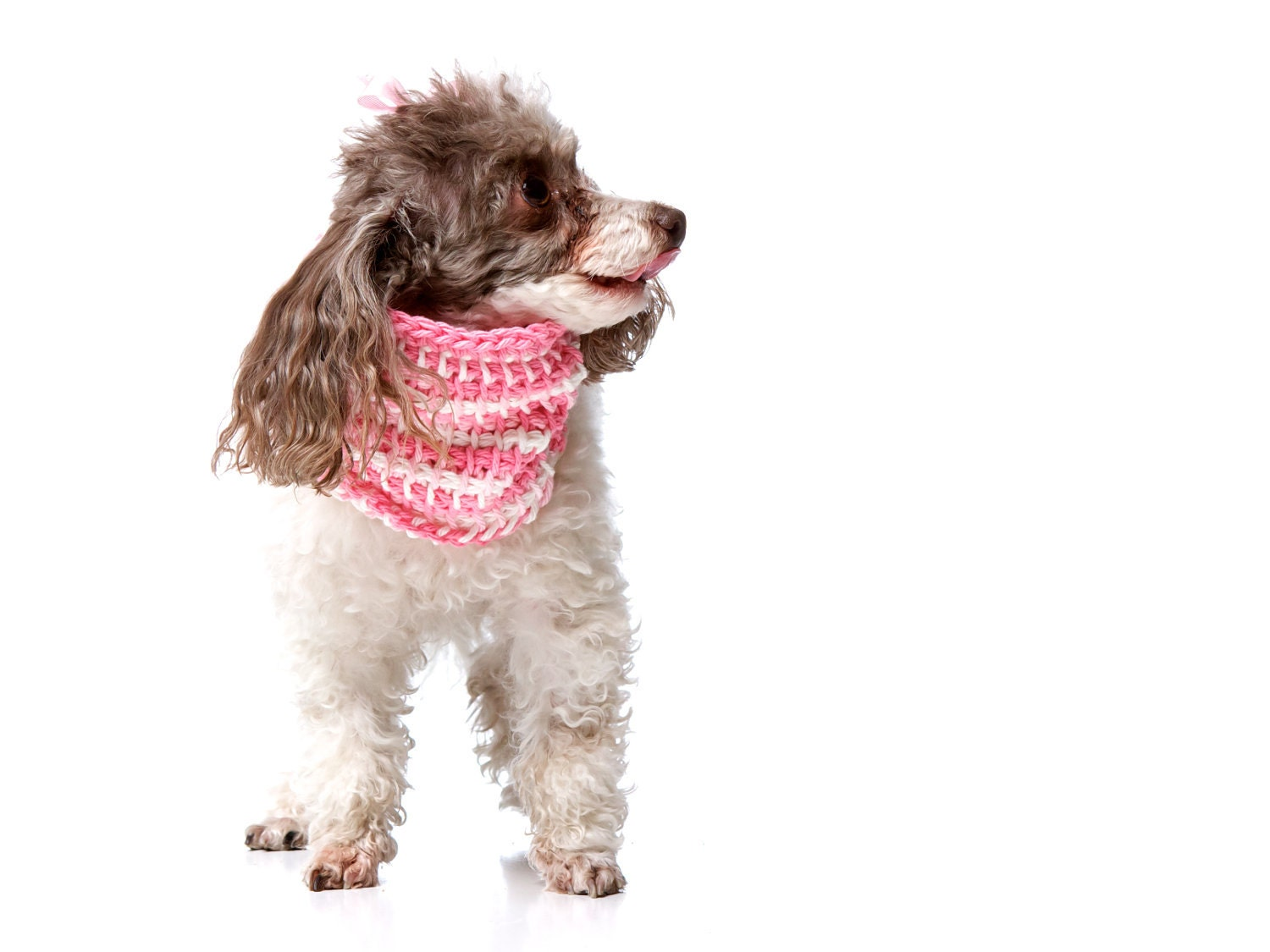 XS Pretty in Pink Spring Dog Sweater Cowl (neck warmer / scarf for dogs) Hot Pink and White 100% Cotton- Tunisian Crochet