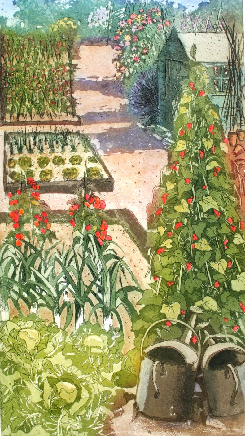 Allotment , the perfect plot, Etching and aquatint  with watercolour - SallyWinterEtchings