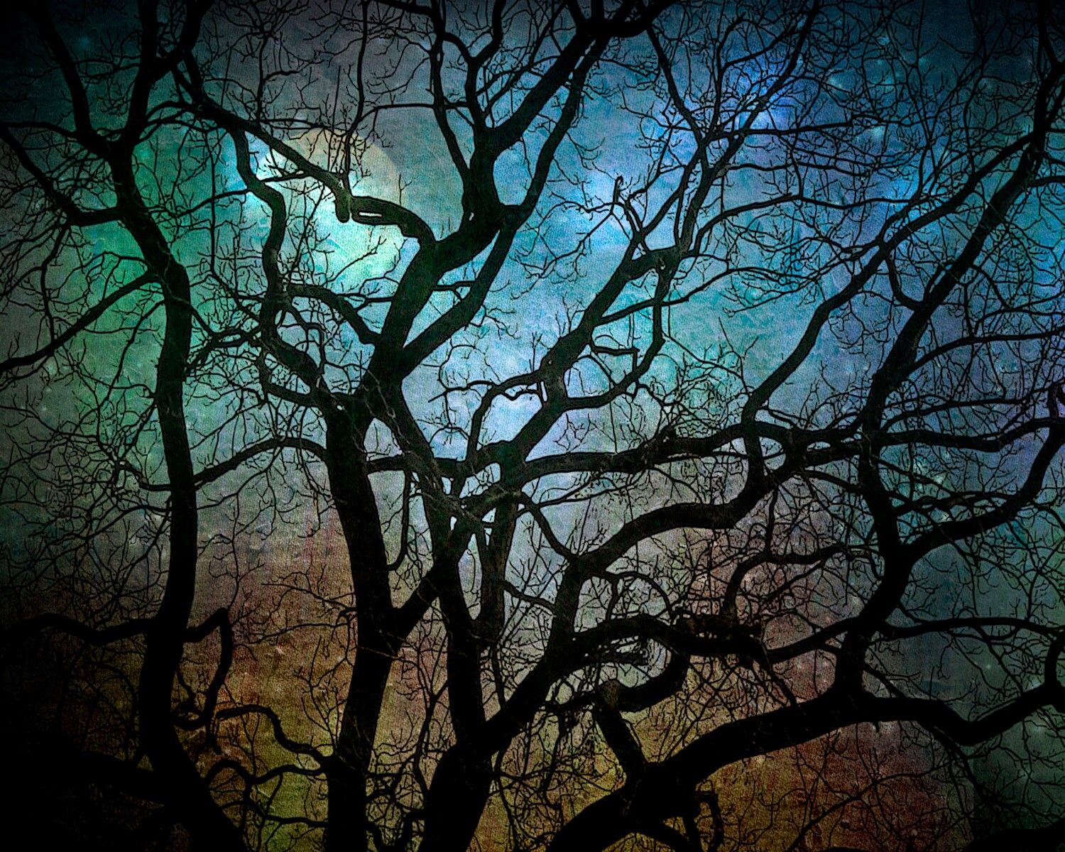 Nature Photography, teal, black tree branches, winter home decor, night sky, Blue Moon Over Philadelphia fine art photography print 8x10 - moonlightphotography