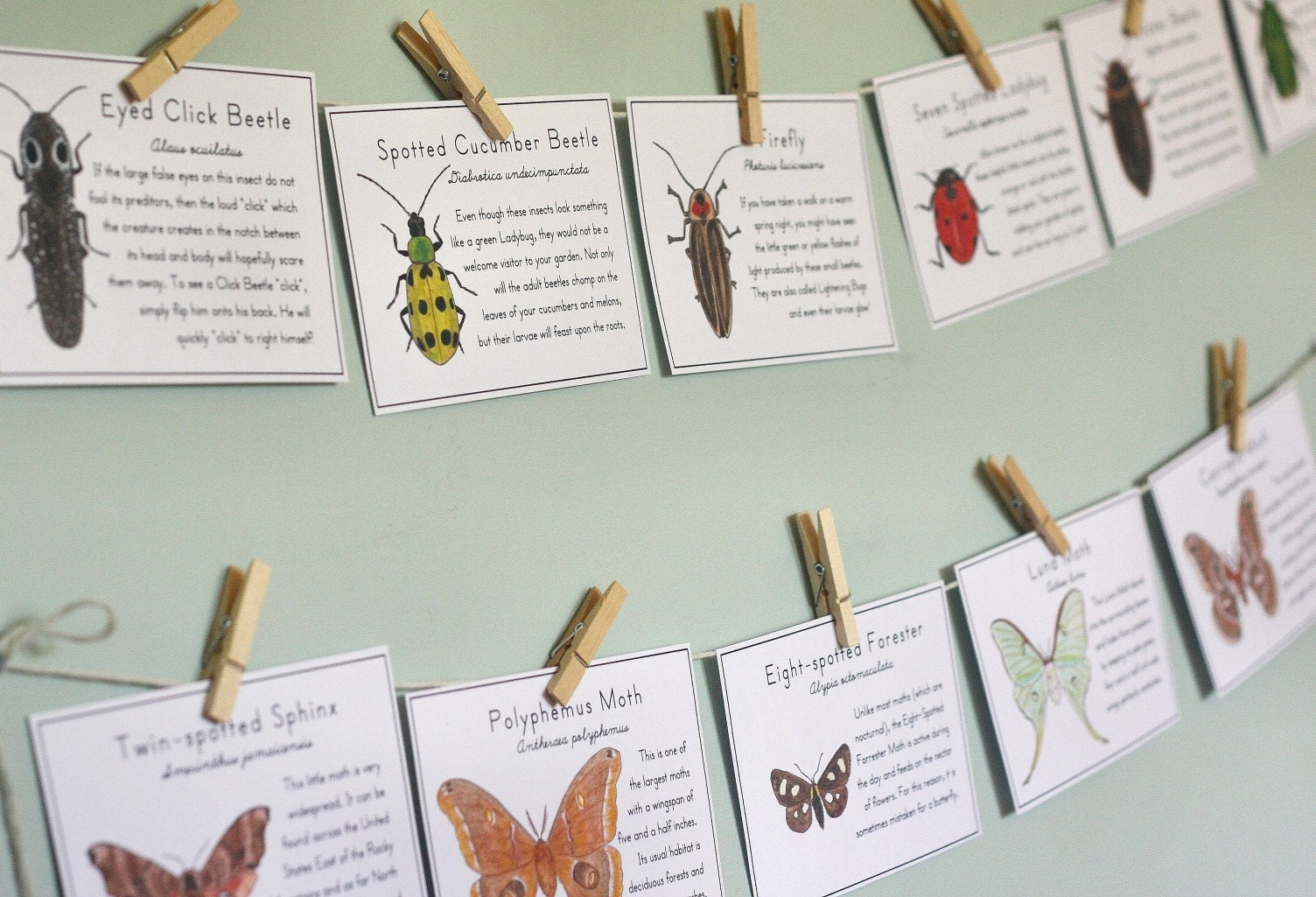 Insect Cards with Moths & Beetles - Printable PDF - AliceCantrell