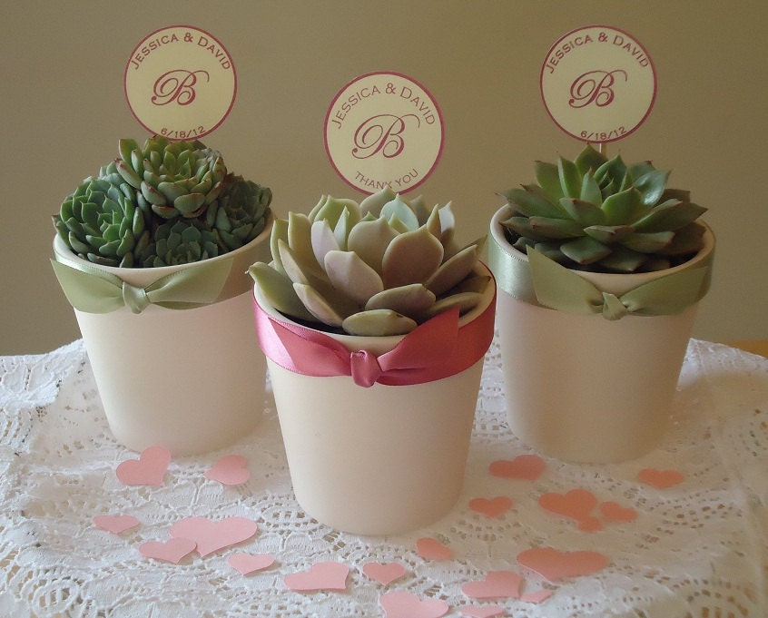 12 Succulent Plant Wedding Favors Rosettes In By SucculentDESIGNS