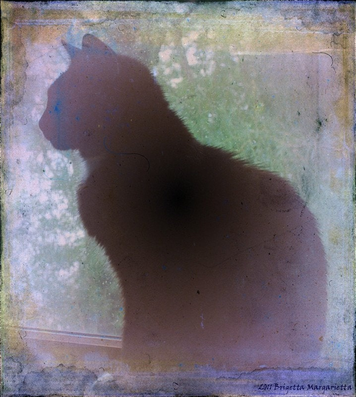 Kitty In the Window  Fine Art Giclee 5 x 7 Reflection Glass Vision Blue Gold Copper Black Grunge CAT