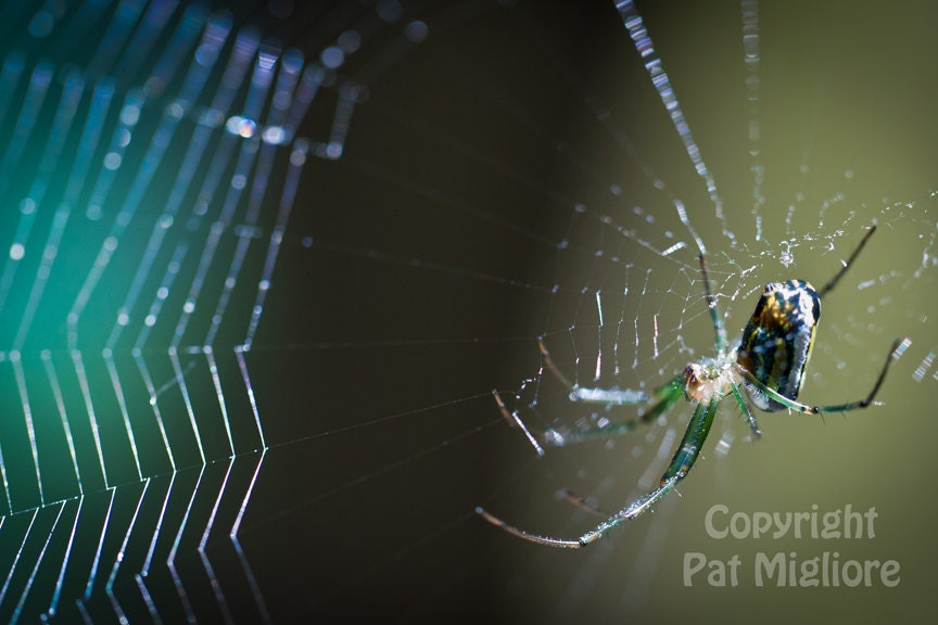 Fine Art Print Unbelievable Close Up of Brilliant Spider Weaving a Web Struck by Sunlight Against a Green Background fPOE - RoselightStudio