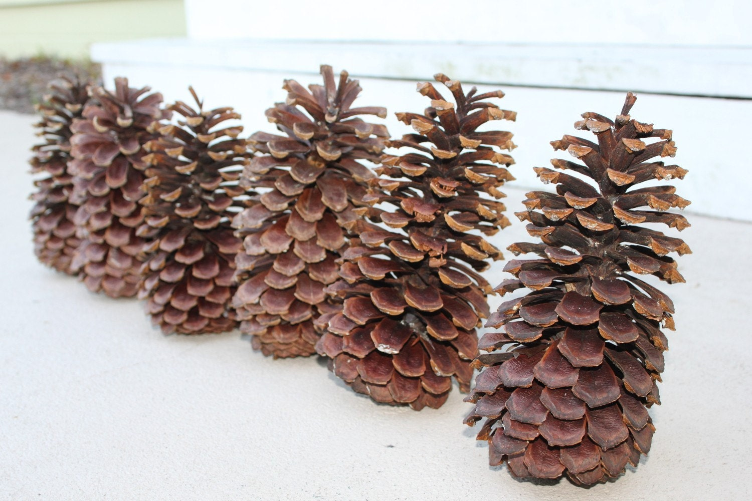 6 extra large pine cones by greenfairythings on etsy