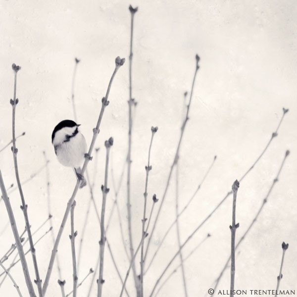 Winter Bird in Snow Photograph - Animal Photo Print - Minimalist Art - Black and White Photography - Winter Decor -
