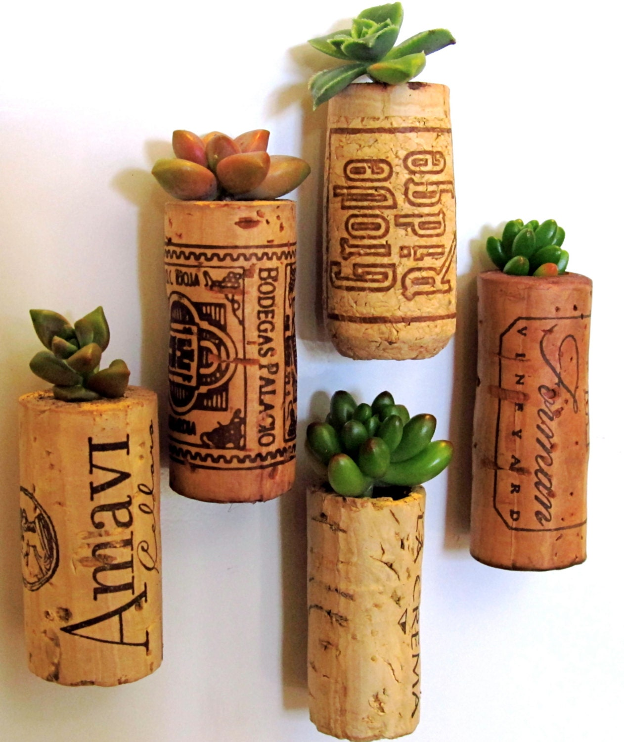 5 Succulent Wine Cork Planters, mounted on magnets - TheLovelySuccubent