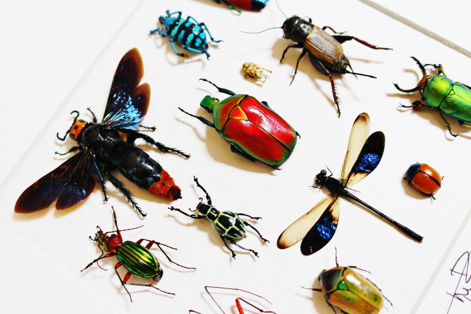 Real insect art