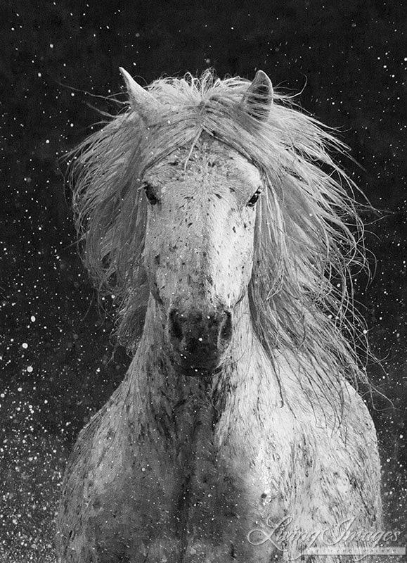 Splash Fine Art Horse Photography by WildHoofbeats on Etsy