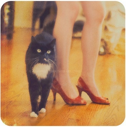 black cat photograph, catwalk, Halloween, cute tuxedo cat furry feline, legs, ruby red high heels, orange yellow fashion, animal, print 5x5 - sixthandmain