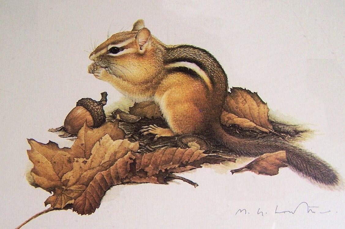 Vintage wildlife art woodland chipmunk cabin by glimmersintime