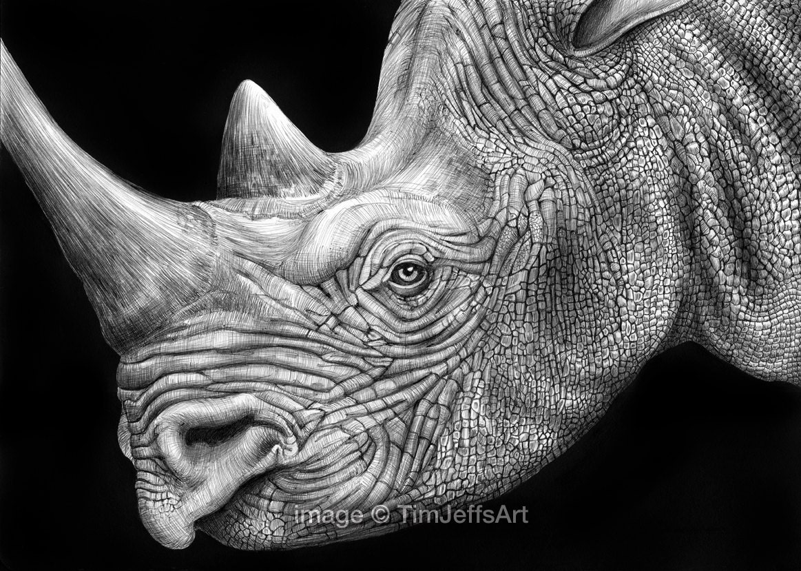 Black Rhinoceros Ink Drawing. Signed by Artist - TimJeffsArt