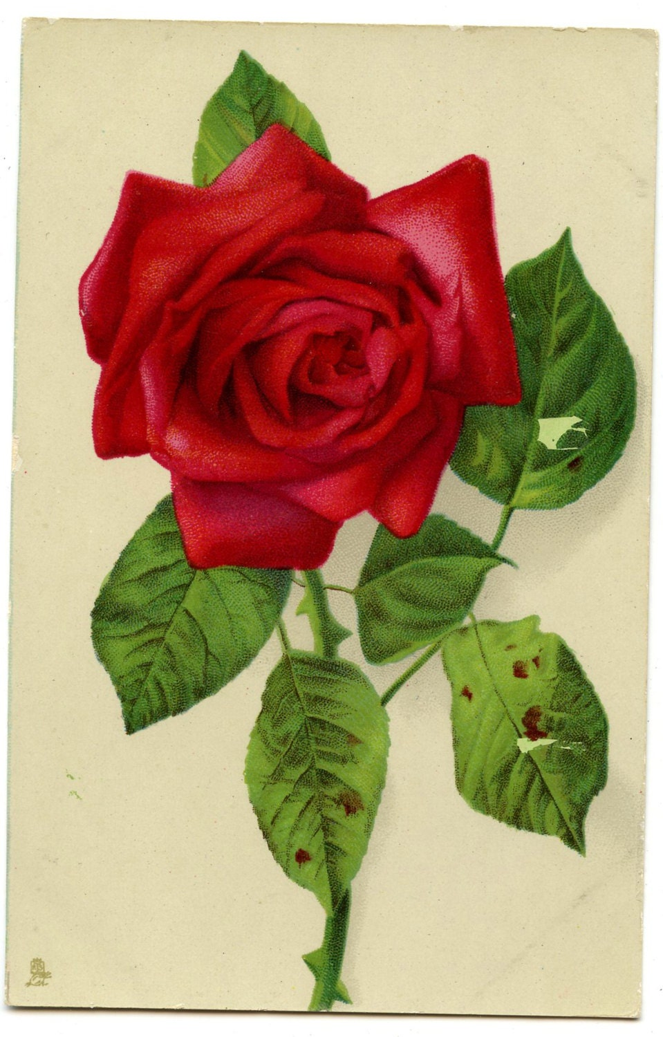 Image of 1920s Red Rose Postcard Edwardian Victorian Antique Vintage Photo Flowers Floral Chromolithograph