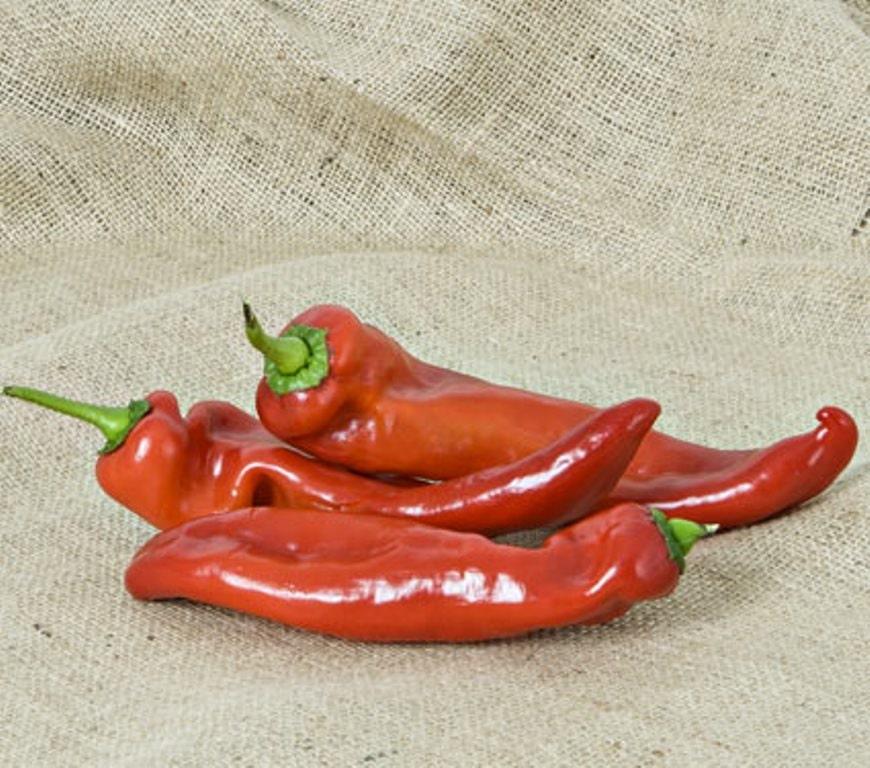 Chili Pepper  Capsicum annuum  Encyclopedia of Life