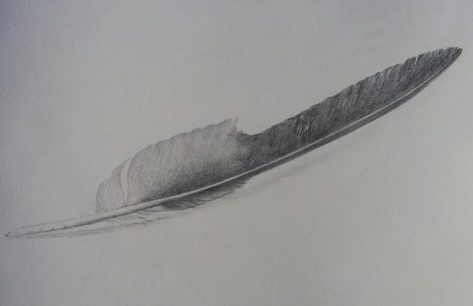 Eagle Feather Pencil Drawing Original eagle feather drawingEagle Feather Pencil Drawing
