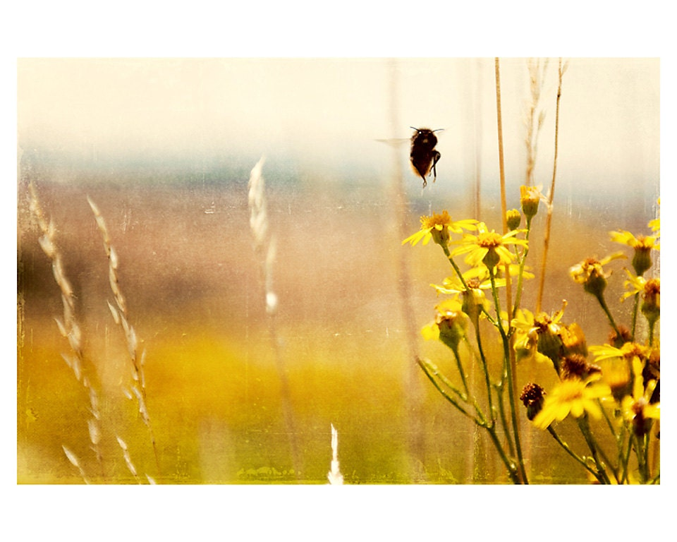 bee photo print - whimsical fine art nature photography, insect, nature, summer, flower, flight, yellow, wings - oohprettyshiny