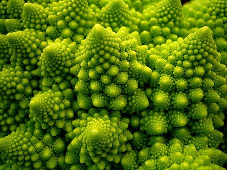 Organic Heirloom Broccoli Romanesco Seed RARE gourmet