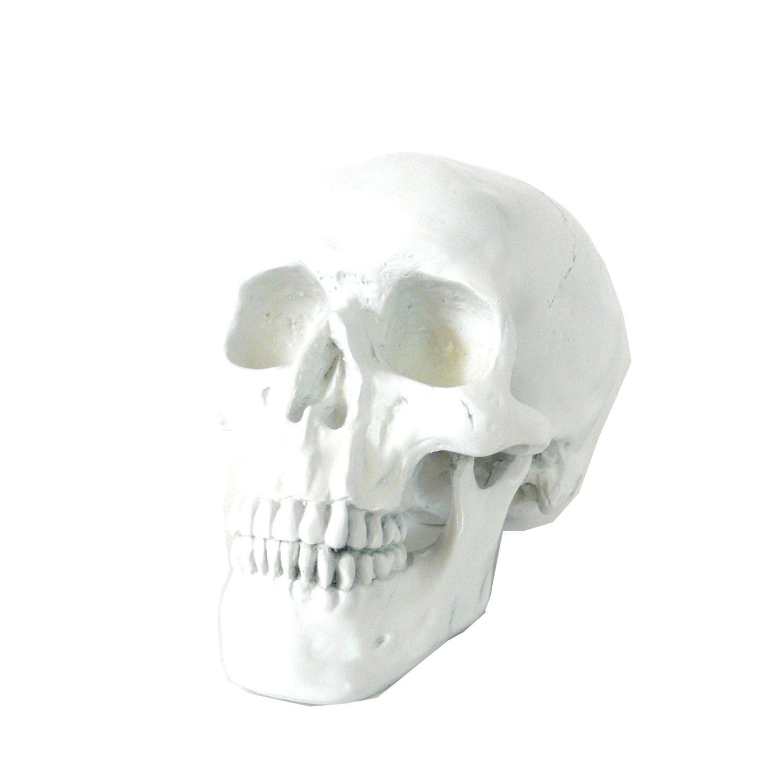 Modern white skull home decor oddities skulls macabre by for Skull home decor