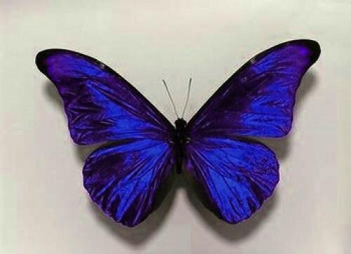 10 Beautiful 3D Sapphire Blue Sparkling Wedding Bedroom Butterflies Flower- Table Decorations - MyButterflyLove