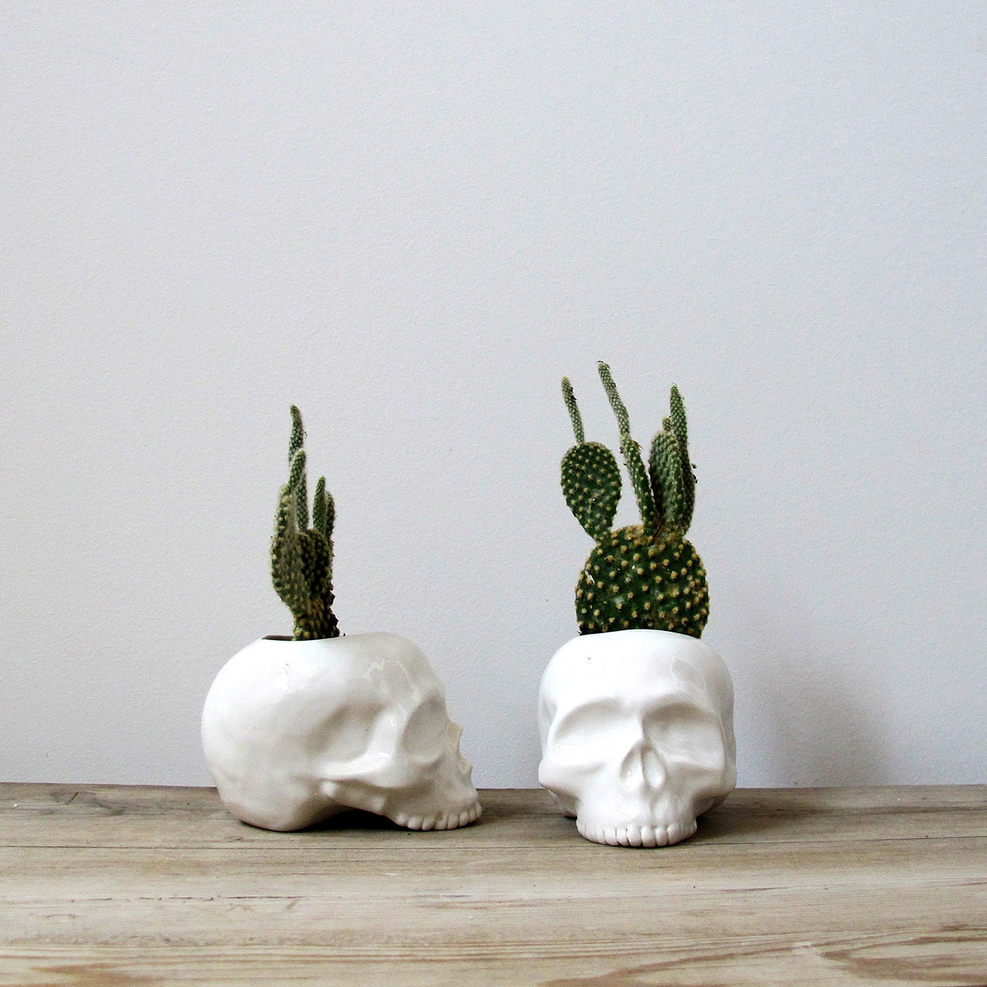 Ceramic Skull Planter - perfect for cactus succulent or air plant - mudpuppy