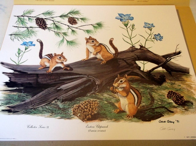 Vintage Gene Gray Print Eastern Chipmunk W Coa By