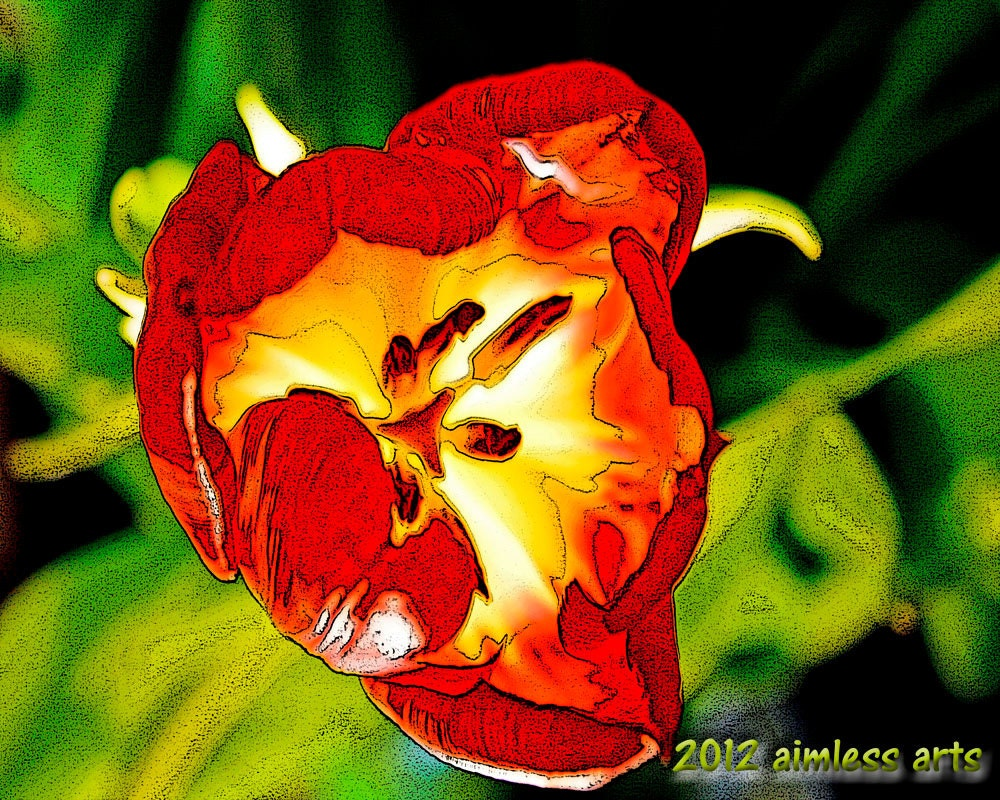 Fine Art Print - Dawn of the Tulip - Floral - Photography - Giclee - aimlessjonah