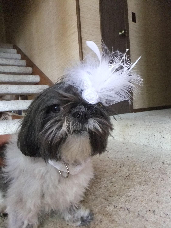 White Wedding собачьей шерсти Лук чародей