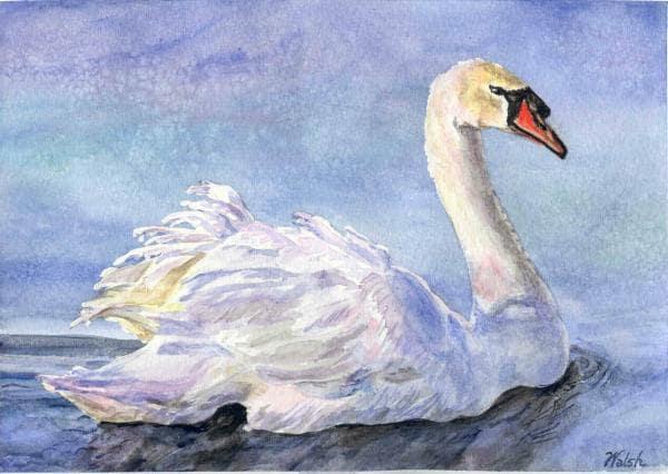 "Original Watercolor Painting: elegant swan ""Gliding"" - BarbaraWalshArt"