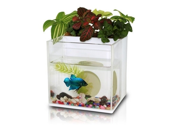 A dialogue between flowers and fish aquarium planter by for Fish tank with plants on top