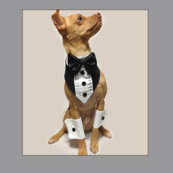 Tuxedo Bandanna and White Shirt Cuff Wedding Photo Set for a Cat or a Dog
