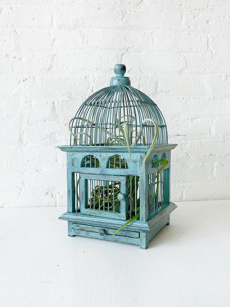Air Plant in Blue Bird Cage - Distressed Teak LIVE Garden - EarthSeaWarrior