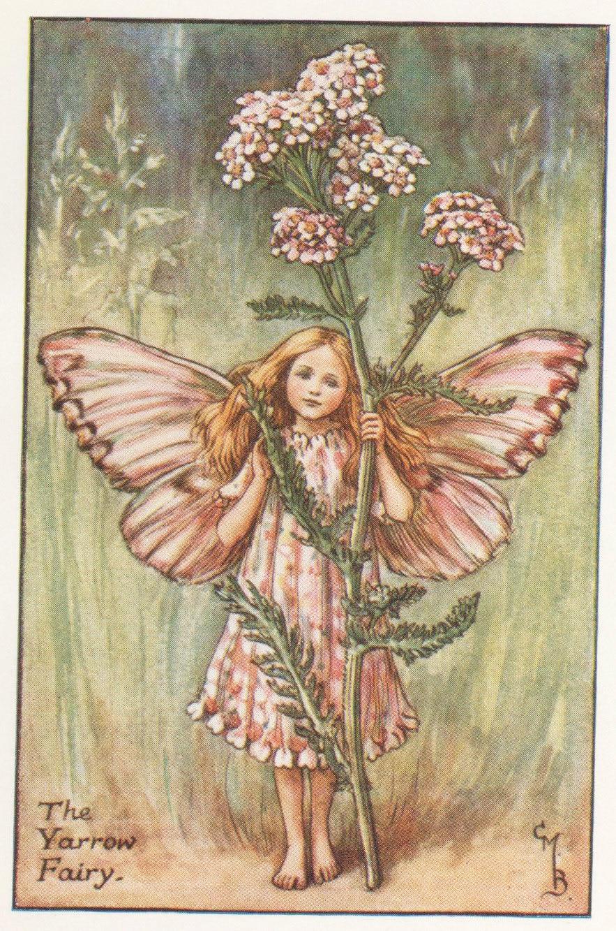 Flower Fairies THE YARROW FAIRY Vintage Print c1930 by Cicely Mary Barker