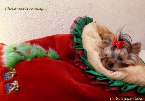 Christmas Cuddle Sack Red Tissavel Fur and Soft Golden Minky Fur Dog Bed small - DataDesignBoutique