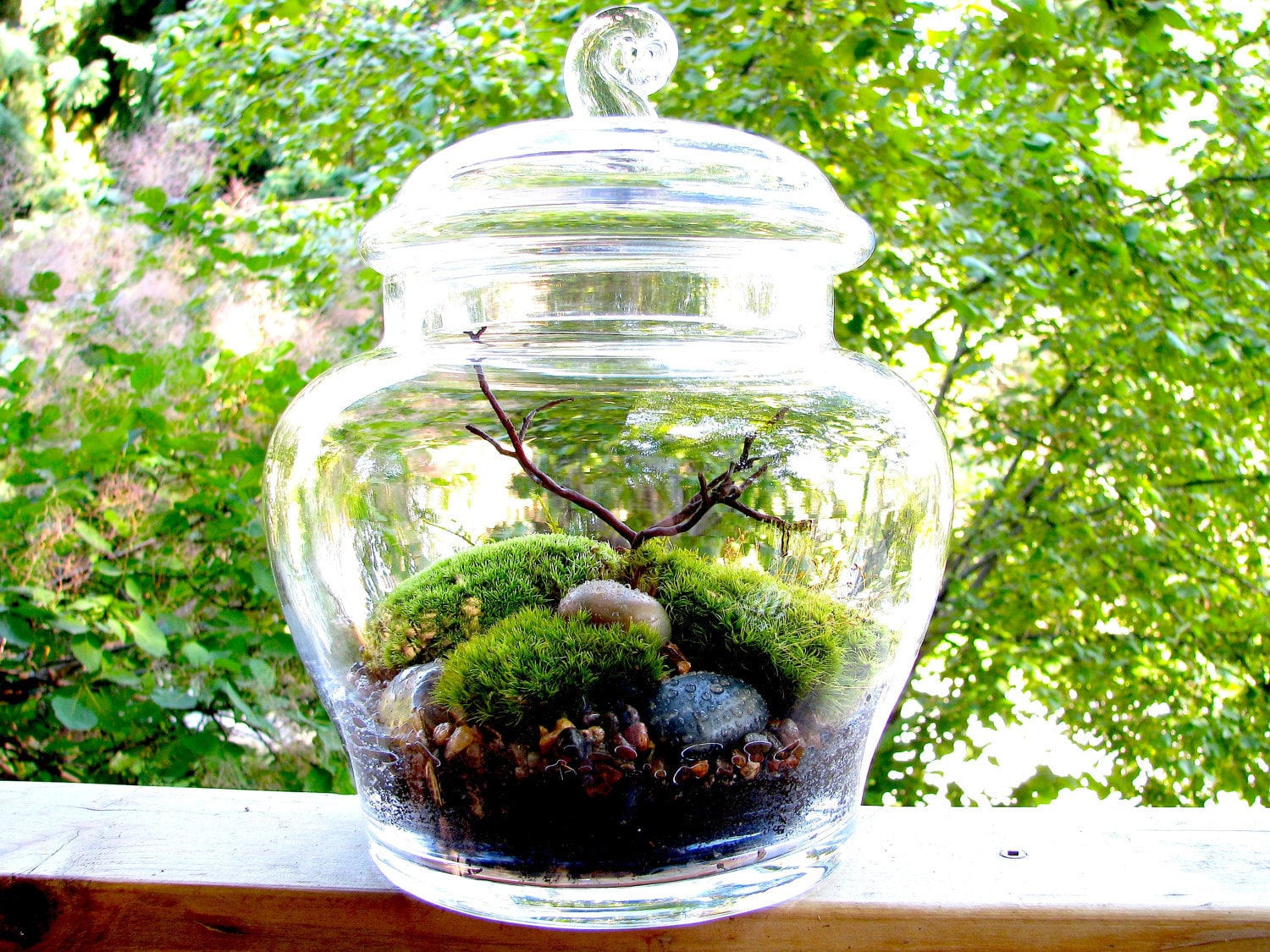 Crooked nest 39 s terrariums bring the serenity of a garden for Mini japanese garden